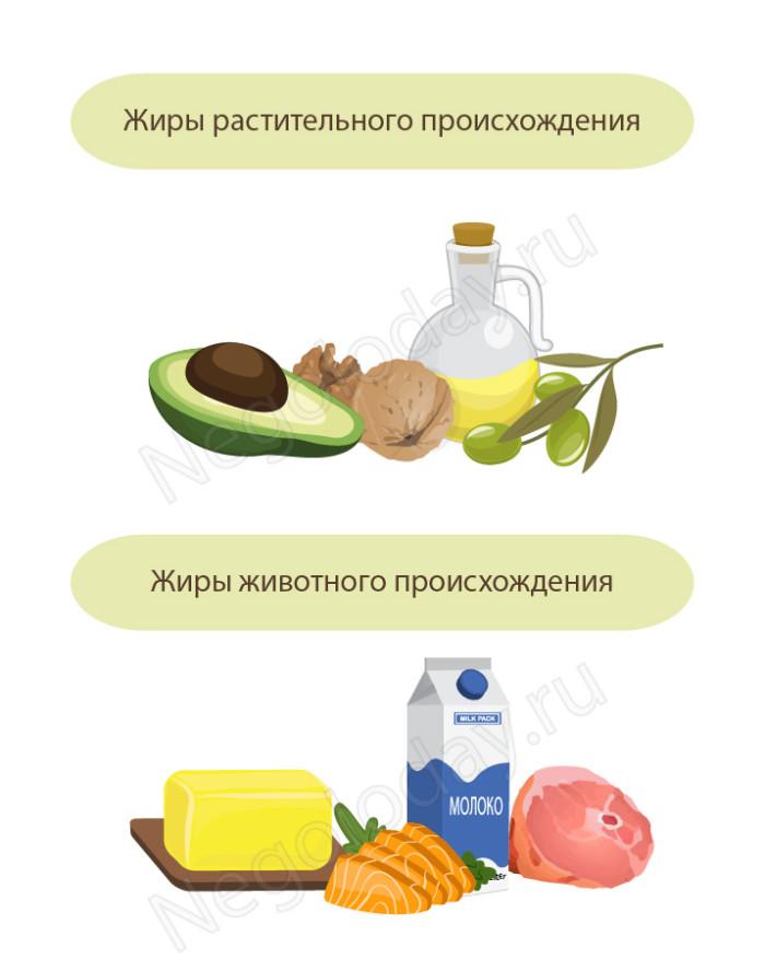 Жиры в продуктах питания (растительные и животные)