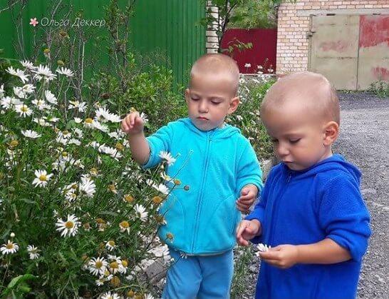 Дети рвут ромашки в деревне